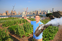 "Andrew Coté, 38 years old, from 4 generations of beekeepers, in the apiary in the new organic farm set up on a roof by Ben Flanner in Greenpoint, Brooklyn, just across from Manhattan. http://rooftopfarms.org/ With 300m2 of garden, the farm is counting on rapidly expanding to 1200m2; henhouses are being considered.<br /> Andrew is the founder of the New York City Beekeepers' Association, created in December 2008, which is rapidly growing, bringing together experienced and beginner beekeepers and also all bee lovers. Surfing the ""green"" wave of the Obama administration, the beekeepers' association of New York hopes to obtain the legalization of beekeeping in the Big Apple."