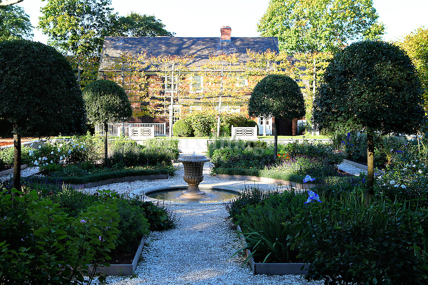 garden with plants