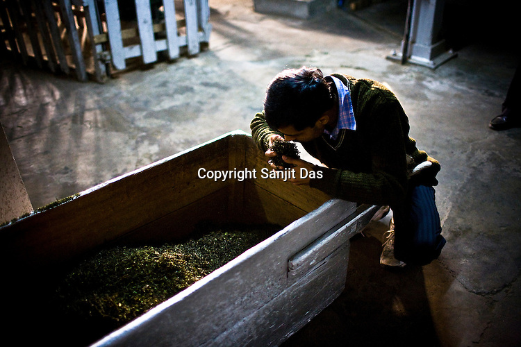 Sanjay Mukerjee, the factory manager, inhales the aroma of the first flush tea leaves after the drying process at the Makaibari Tea estate, in Darjeeling, India.