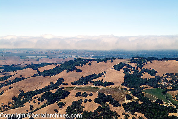 aerial photograph vineyards fog Sonoma mountain, Sonoma County, California