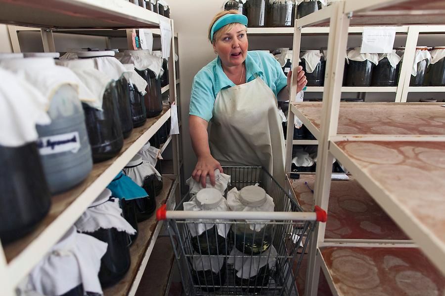 Udelnaya, Russia, 05/10/2012..Natalia Lepyoshkina at work in the International Medical Leech Centre, the largest leech farm in the world.
