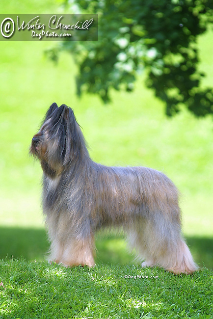 Champion Briard Shopping cart has 3 Tabs:<br />