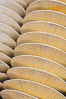 Europe/France/Aquitaine/33/Gironde/Bassin d'Arcachon/Gujan-Mestras: Port Larros (Port Ostréicole) Détail collecteur pour le nessain des huitres