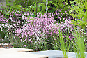 Pink and white ragged robin (Lychnis flos-cuculi and Lychnis flos-cuculi 'Alba') in front of royal ferns (Osmunda regalis). RBC Blue Water Roof Garden, designed by Professor Nigel Dunnett, RHS Chelsea Flower Show 2013.