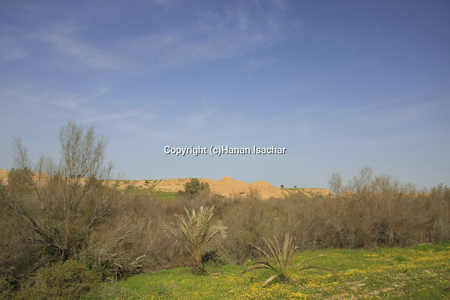 Israel, Besor region in the northern Negev. Springtime at Eshkol National Park