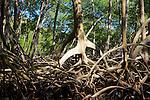 Mangroves, Haitises National Park