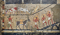 Ancient Egyptian wall paintings of the Tomb of Iti and Neferu, Ritual slaughter scene Scene, Thebes, First Intermediate Period (2118 – 1980BC). Egyptian Museum, Turin. Schiapelli excavations cat 14345/15.<br /> <br /> The ritual slaughter scene depicts an ox being held down with blodd being collected in a bowl. These tempera paintings were on a crude mud and straw plaster and were of typical Old Kingdom tombs showing ritual offering scenes. The tomb was partly cut into rock with mud brick walls and vaults. The facade of the tomb had 16 columns looking over a courtyard sloping towards the valley. These tempera paintings were on a crude mud and straw plaster and were of typical Old Kingdom tombs showing ritual offering scenes. The tomb was partly cut into rock with mud brick walls and vaults. The facade of the tomb had 16 columns looking over a courtyard sloping towards the valley.