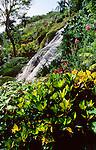 Shaw Botanical Gardens, Ocho Rios, Jamaica