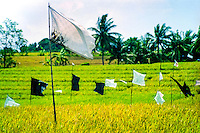 Bali, Badung, Seseh. Seseh is a very fertile area with large ricefields, located north of Canggu and Kuta. The flags are used to keep birds away.