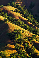 Oak trees on rolling hills of Sonoma Valley, California