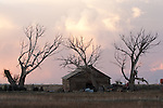 Barn and trees at sunset