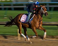 LOUISVILLE, KY - MAY 01: Monomoy Girl, trained by Brad Cox, exercises in preparation for the Kentucky Oaks at Churchill Downs on May 1, 2018 in Louisville, Kentucky. (Photo by Scott Serio/Eclipse Sportswire/Getty Images)