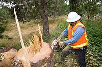 Lumber Jack cutting down a tree