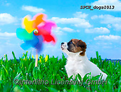 Xavier, ANIMALS, REALISTISCHE TIERE, ANIMALES REALISTICOS, dogs, photos+++++,SPCHDOGS1013,#a#, EVERYDAY