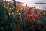 San Juan Islands, Nature Conservancy Preserve, Yellow Island, wildflowers, Washington State, Pacific Northwest, USA,