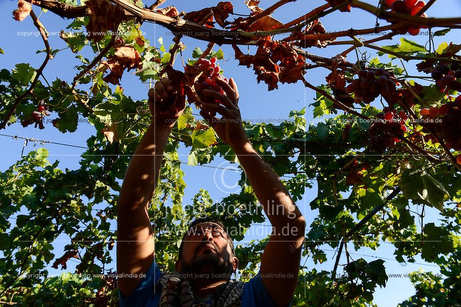 TURKEY Manisa, cultivation of grapes at farm / TUERKEI, Anbau von Tafeltrauben auf einer Farm