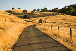 Country road and barb wire fences through the golden hills dotted with oak trees on a summer morning, Amador City, Calif.