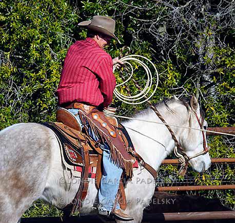 Cowboy taking a dally at a cattle branding. Escuela Ranch, San Luis Obispo, California