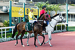 Hugh Bowman riding Werther during the Audemars Piguet Queen Elizabeth II Cup at Sha Tin race course on April 30, 2017 in Hong Kong, China. (Photo by Marcio Rodrigo Machado / Power Sport Images)
