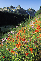 Small-Flowered Paintbrush growing in meadow with Tatoosh Range in background, Mount Rainier National Park, Washington