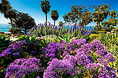 Tom Mackie, LANDSCAPES, LANDSCHAFTEN, PAISAJES, photos,+America, American, California, Heisler Park, Laguna Beach, North America, Tom Mackie, USA, cloud, clouds, flower, flowers, ho+rizontal, horizontals, natural, nature, nobody, outdoors, palm tree, purple, scenery, scenic, travel, tree, trees, weather,Am+erica, American, California, Heisler Park, Laguna Beach, North America, Tom Mackie, USA, cloud, clouds, flower, flowers, hori+zontal, horizontals, natural, nature, nobody, outdoors, palm tree, purple, scenery, scenic, travel, tree, trees, weather+,GBTM190136-1,#l#, EVERYDAY