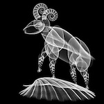 X-ray image of a sheep (white on black) by Jim Wehtje, specialist in x-ray art and design images.
