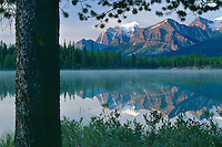 Bow Range from Herbert Lake<br /> Banff National Park<br /> Rocky Mountains<br /> Alberta,  Canada