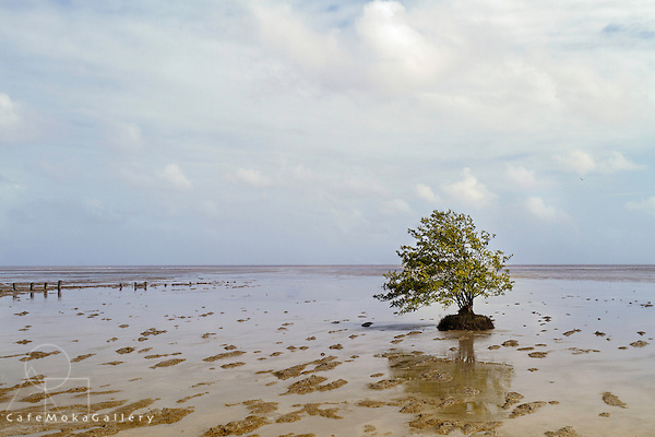 Area where the Golden Grove mangrove re development project is underway. One solitary tree