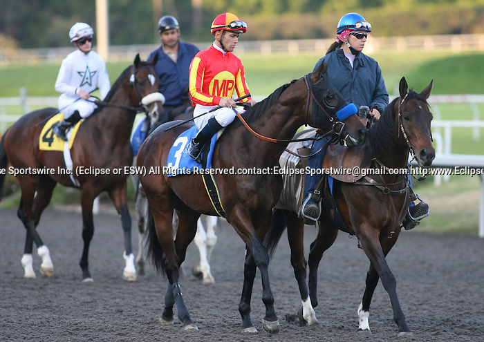 21 November 2009: Indian Firewater in the Hollywood Prevue Stakes (GIII) at Hollywood Park, Inglewood, CA.