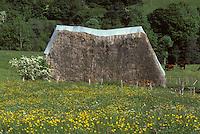 Europe/France/Auvergne/15/Cantal/Env de Thiézac : Ancien buron et chaumes vers Las Molineries
