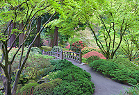 Bridge and early spring growth. Portland Japanese Gardens, Oregon.