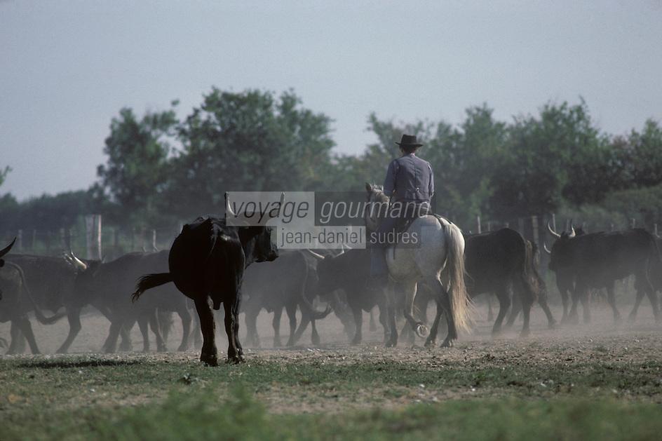 Europe/France/Provence-Alpes-Côte d'Azur/13/Bouches-du-Rhône/Camargue : Triage des taureaux et gardian à cheval