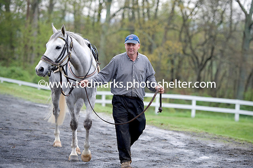Mischief and Robert Cutler amble over to the Middleburg paddock.