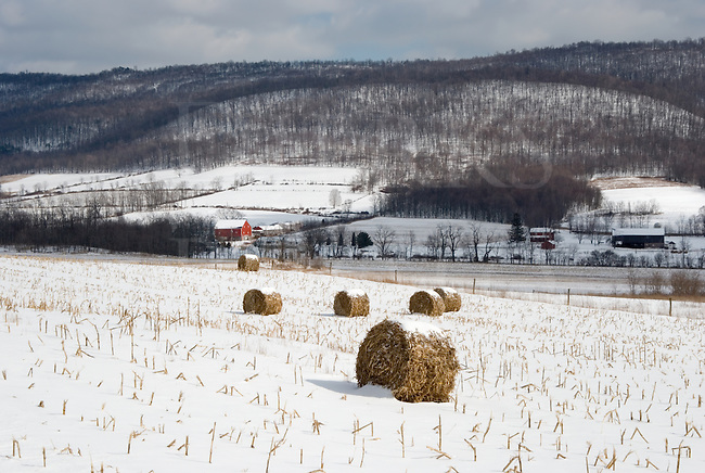 A farming valley under dappled light with rolls of corn stalks laying in a snowy cornfield.