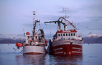 Norwegian coastal fishing boats pumping herring into hold from nets, Vestfjord, Arctic Norway, North Atlantic