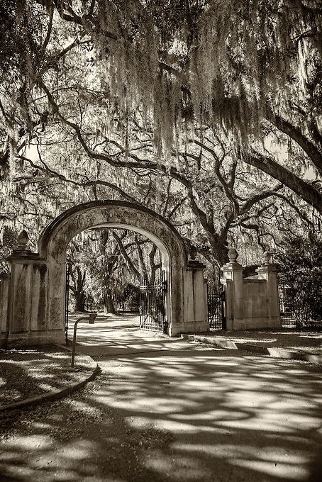 The Iconic oak lined road at Wormsloe Plantation, Savannah.<br /> Edition Size 200 Limited; 25 Artist Proof