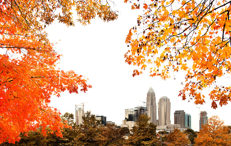 The brilliant hue of orange maple leaves in autumn frame the Charlotte, NC, skyline. A summer with frequent rains, followed by fall with hot afternoons and cool nights gave leaf peepers a pallet of colorful fall foliage to enjoy in 2009. Photo shows the still-under-construction Duke Energy Center, Charlotte's second-largest skyscraper, on the left side of the frame.
