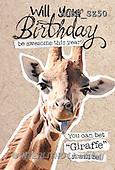 Samantha, ANIMALS, REALISTISCHE TIERE, ANIMALES REALISTICOS,  photos+++++,AUKPSZ50,#A# , funny