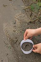Kinder gießen Tierspur aus Gips, Mädchen stülpt Ring aus Karton über das Trittsiegel, die Fußspur von einem Reh