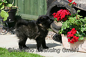 Bob, ANIMALS, REALISTISCHE TIERE, ANIMALES REALISTICOS, dogs, photos+++++,GBLA4344,#a#, EVERYDAY