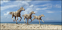 BNPS.co.uk (01202 558833)<br /> Pic: JamesDoran-Webb/BNPS<br /> <br /> ****Please use full byline****<br /> <br /> Three thoroughbreds galloping along the seafront in Cebu, Philippines.<br /> <br /> These majestic horses galloping along a white sand beach may look real - but in fact they're made from thousands of pieces of driftwood salvaged from beach.<br /> <br /> The life-size sculptures are the work of British master craftsman James Doran-Webb and took a painstaking six months to assemble.<br /> <br /> They stand at around 6ft tall - or 16 hands in horse terms - and each is made from 400 pieces of driftwood of varying sizes built around a stainless steel skeleton.<br /> <br /> They weigh half a tonne each once complete and can take the weight of five people.<br /> <br /> James cleverly makes them with moveable limbs so they can be arranged into lifelike poses.<br /> <br /> The intricate trio of horses were constructed for the Gardens by the Bay in Singapore, a nature park similar to Cornwall's Eden project.