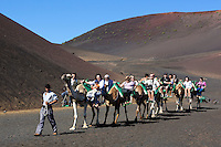 Spain, Canary Island, Lanzarote, near Yaiza: Parque Nacional de Timanfaya (Timanfaya National Park) -  Dromedary rides up the slopes of Timanfaya mountain | Spanien, Kanarische Inseln, Lanzarote, bei Yaiza: Dromedarreiten im Timanfaya Nationalpark (Parque Nacional de Timanfaya)