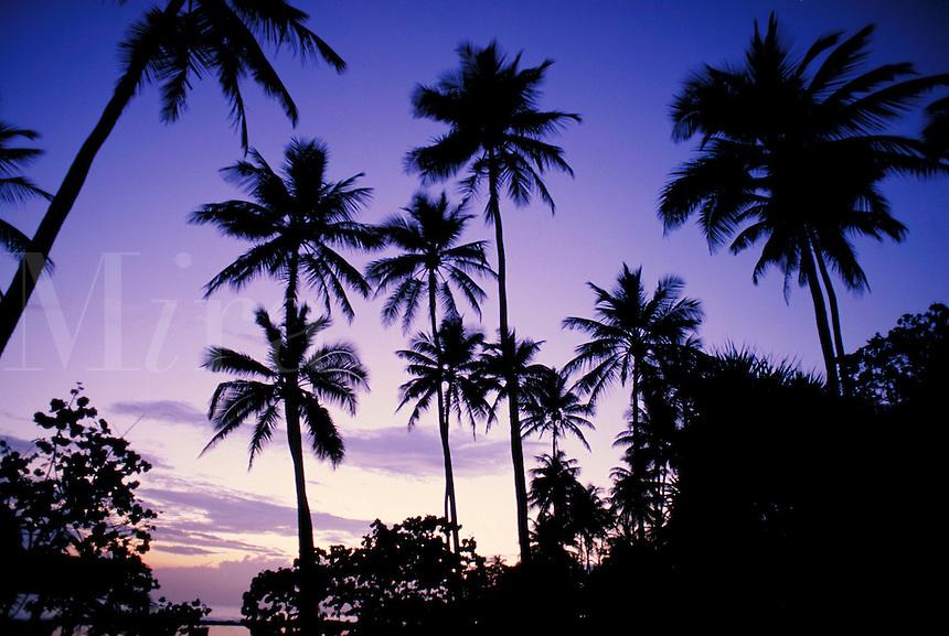 palm tree sunrise silhouette against colorful sky. Dorado Puerto Rico, Hyatt Beach resort.