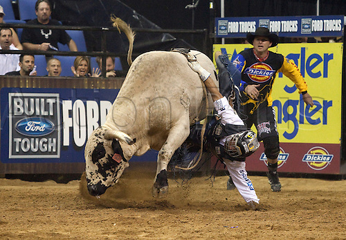 27th September 2009: Mike White gets his hand stuck on French Kiss during the PBR Dickies Invitational at the Citizens Business Bank Arena in Ontario, CA. (Photo by Paul Hebert/Actionplus). UK Licenses Only