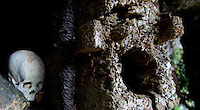 skull in a cemetery outside a cave  in Toraja land, Sulawesi, Indonesia.