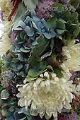 Gisela, FLOWERS, BLUMEN, FLORES, photos+++++,DTGK1999,#f#
