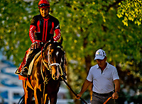 BALTIMORE, MD - MAY 18: Preakness contender Classic Empire heads to a busy track with Trainer Mark Casse as preparations are in full swing for the Preakness Stakes this Saturday at Pimlico Race Course on May 18, 2017 in Baltimore, Maryland.(Photo by Scott Serio/Eclipse Sportswire/Getty Images)