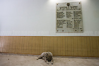 &quot;Gaetano&quot; friendly guards the &quot;Reparto Scorte&quot; memorial stone.<br />