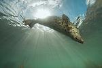 British marine life