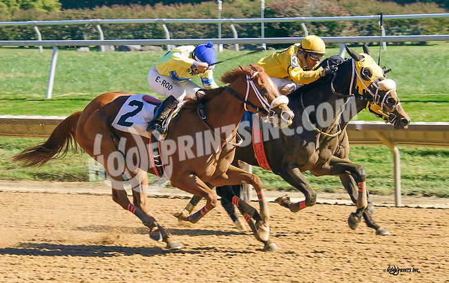 Alpine Sky winning at Delaware Park on 10/15/16